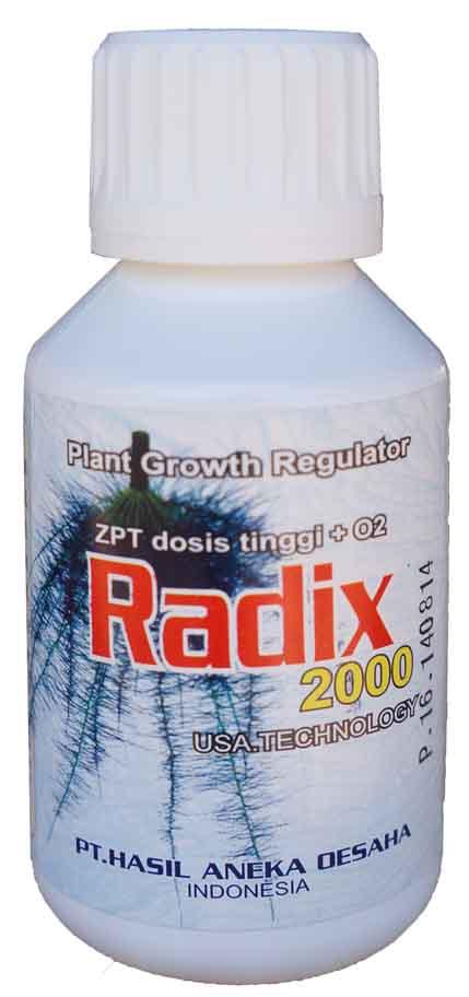 radix200